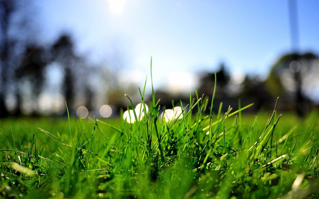 Grass-Macro-Wallpaper-Widescreen
