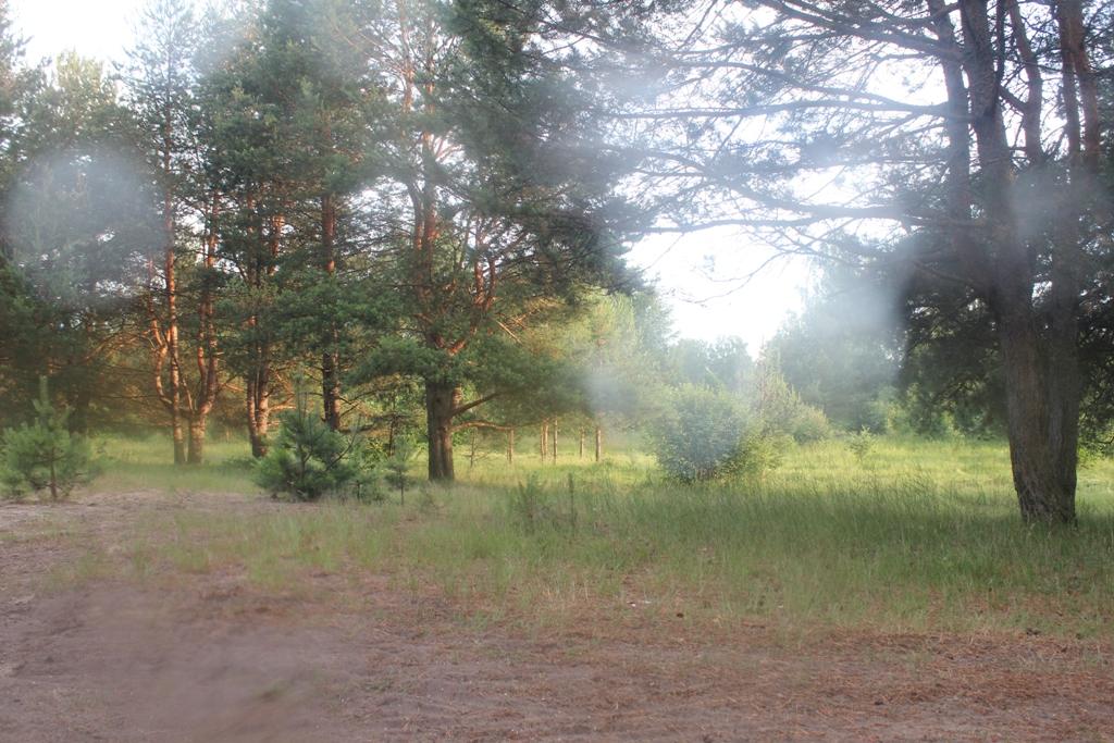 духи леса